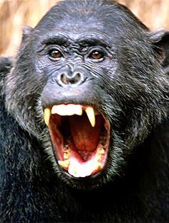 primat_0001_Слой 5