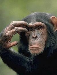 primat_0000_Слой 6