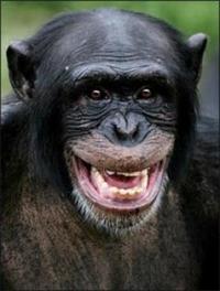 primat_0006_Слой 1