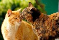Ласковое слово</strong>, говорят, и кошке приятно