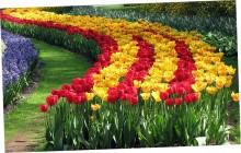 Импорт цветов из Нидерландов