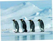 А в Антарктиде