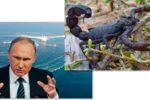 Thumbnail for the post titled: Скорпион не может не жалить