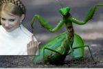 Тимошенко посоветовала Зеленскому