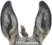 Вадим Дуби